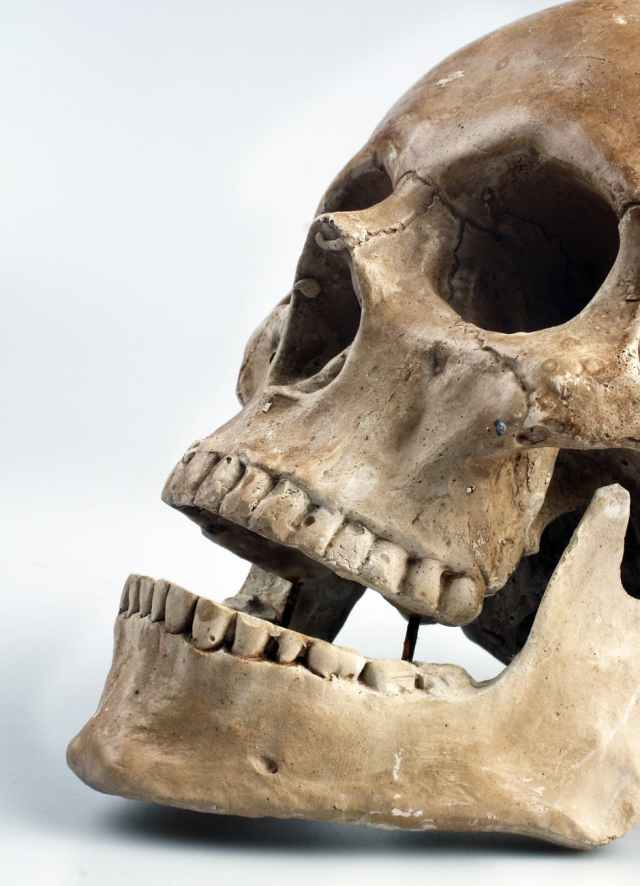 skull-color-teeth-46510.jpeg